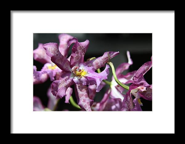 Exotic Framed Print featuring the photograph Exotic Orchids by Andrea Lynch