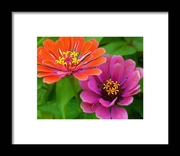 Nature Framed Print featuring the photograph Eye-candy by Mikki Cucuzzo