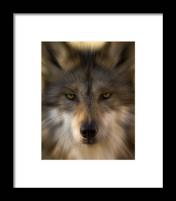 Wolf Framed Print featuring the photograph Eyes Of The Beast by Richard Fitzer