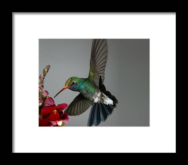 Faa Framed Print featuring the photograph Faa Rounding Error Demo 2561x2048 by Gregory Scott