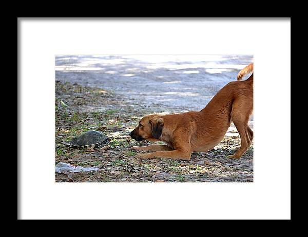 Framed Print featuring the photograph Face To Face by Katrina Johns
