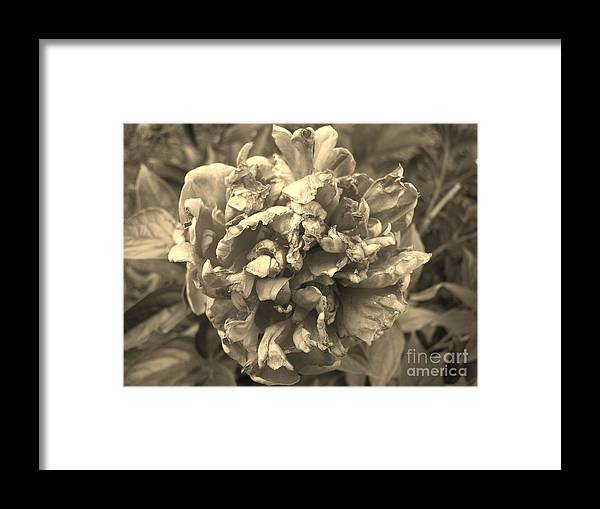 Fading Framed Print featuring the digital art Fading Rose by Sharissa King