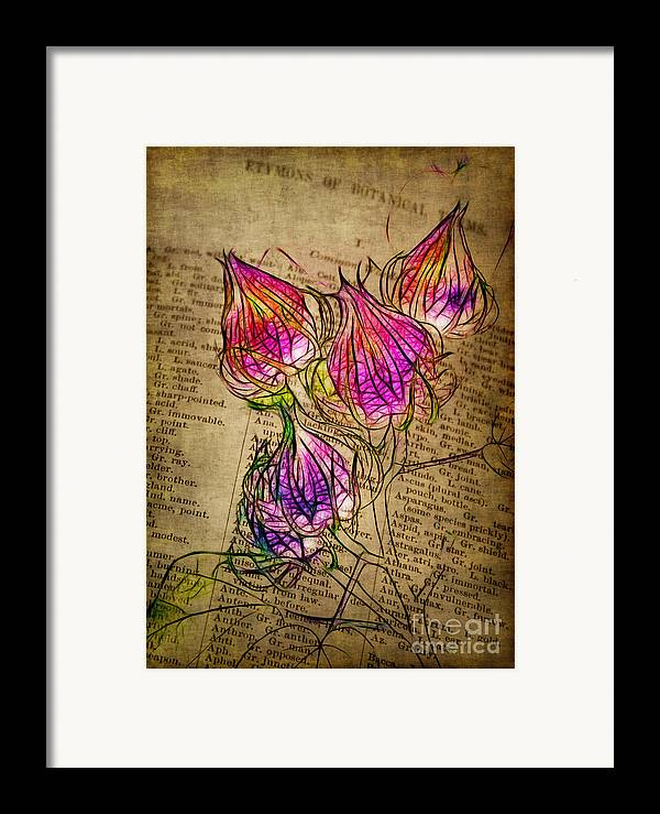 Seedpods Framed Print featuring the photograph Faerie Caps by Judi Bagwell