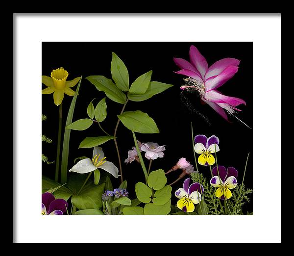 Spring Flowers Framed Print featuring the photograph Fairy Dust by Sandi F Hutchins