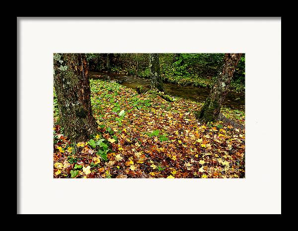 Williams River Framed Print featuring the photograph Fall Along Middle Fork by Thomas R Fletcher