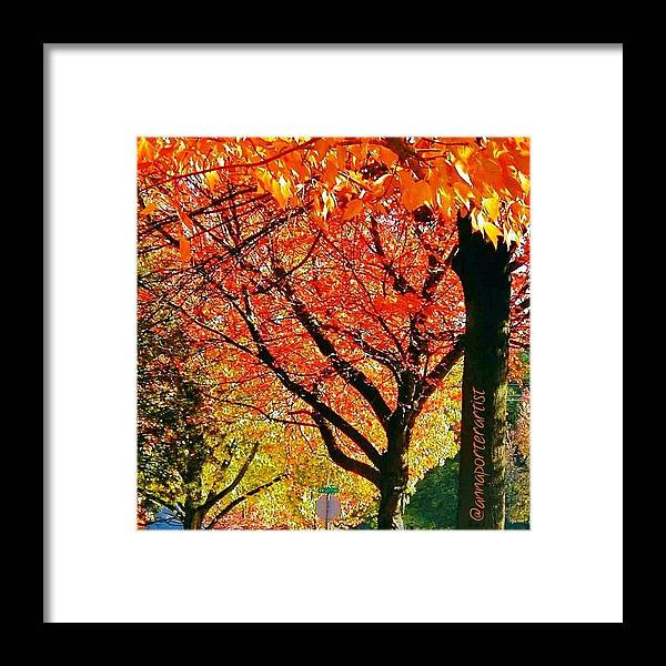 Fall Color Framed Print featuring the photograph Fall Color NW Lovejoy and 22nd Street by Anna Porter