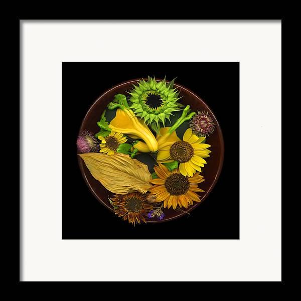 Sunflower Framed Print featuring the photograph Fall Colors by J Arthur Davis