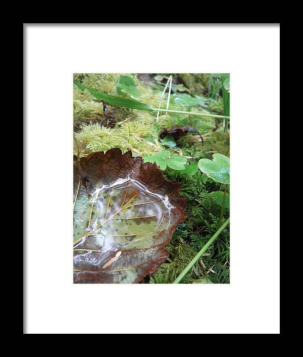 Leaves Framed Print featuring the photograph Fall by Elizabeth Ford