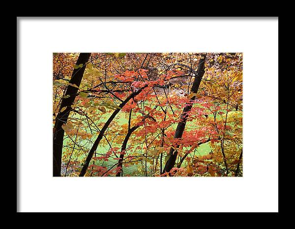 Fall Foliage Framed Print featuring the photograph Fall Kaleidoscope by Kim Hymes