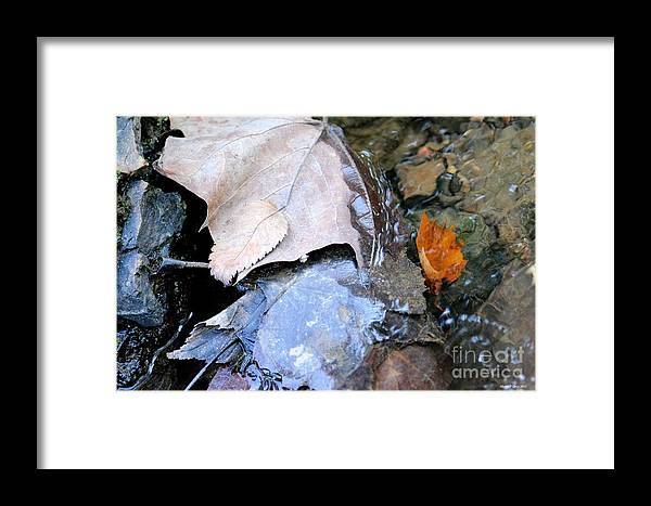 Fall Leaf Abstract Framed Print featuring the photograph Fall Leaf Abstract by Maria Urso