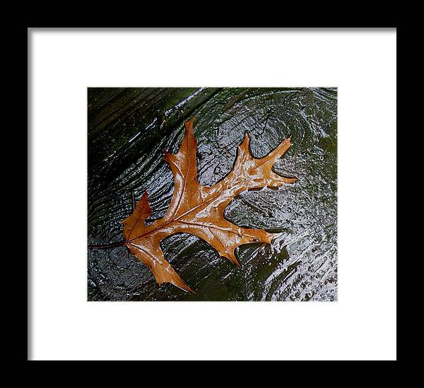 Photography Fall Nature Leaf Water Rain Wet Brown Prints Posters Greeting Cards Framed Print featuring the mixed media Fall Leaf by Connie Dye