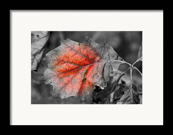 Autumn Framed Print featuring the photograph Fall Leaf by Rick Rauzi