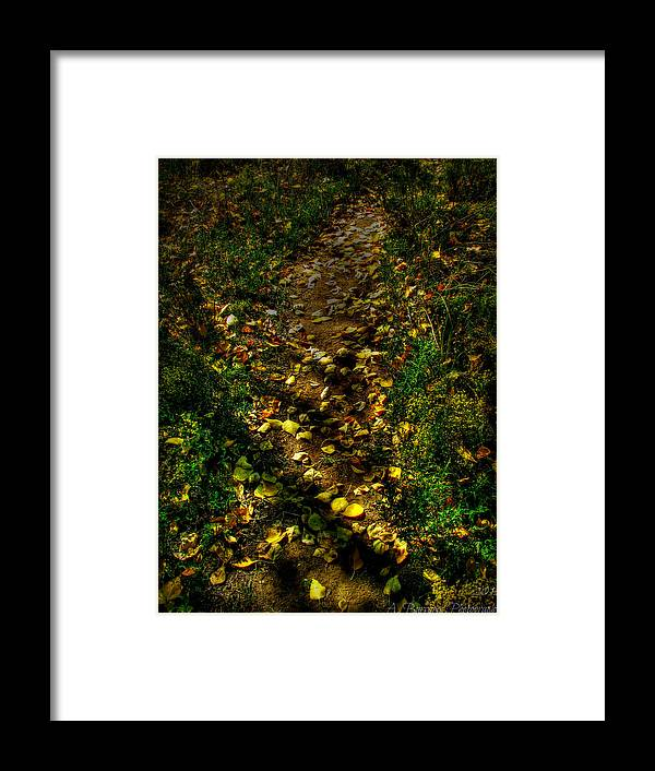 Bradshaw Mountains Framed Print featuring the photograph Fall Lined Trail by Aaron Burrows