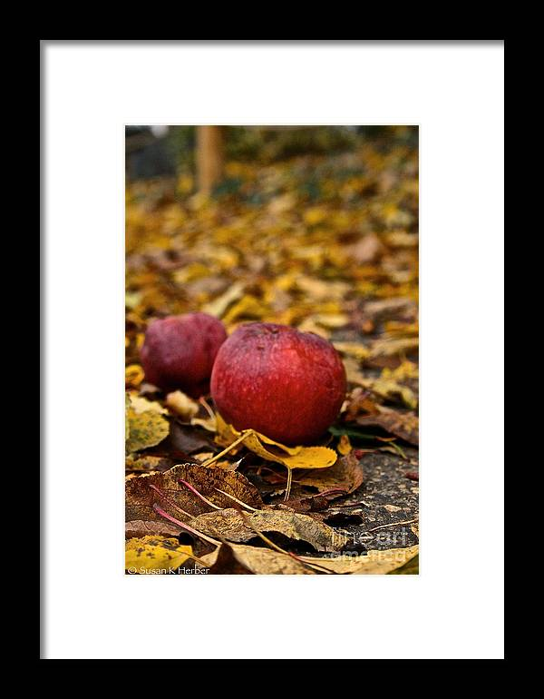 Outdoors Framed Print featuring the photograph Fallen Fruit by Susan Herber