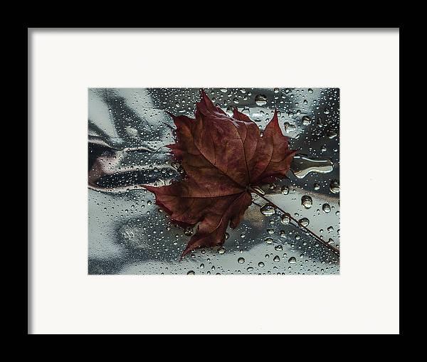 Still Life Framed Print featuring the photograph Fallen Leaf by Vladimir Kholostykh