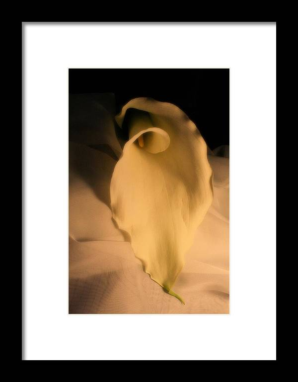 Fallen Framed Print featuring the photograph Fallen by Lynnette Johns