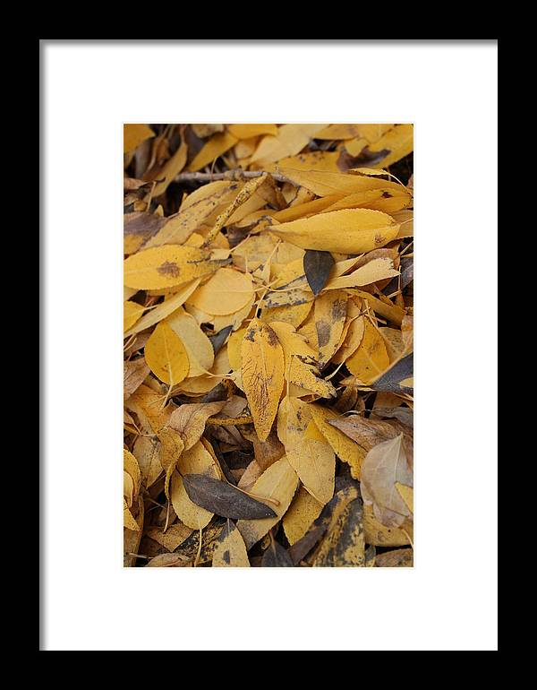 Leaves Framed Print featuring the photograph Fallen by Tricia Janush
