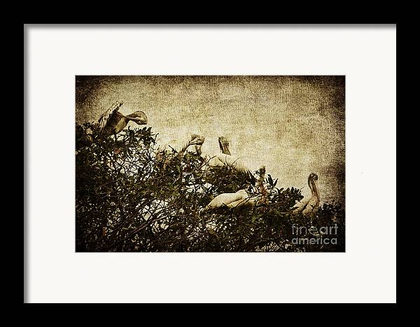 Pelican Framed Print featuring the photograph Family Tree by Andrew Paranavitana