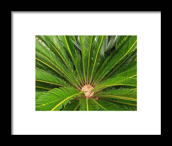 Plant Framed Print featuring the photograph Fancy by Rani De Leeuw
