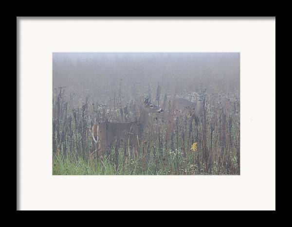 Fawns Framed Print featuring the photograph Fawn At Dawn by Charles Warren