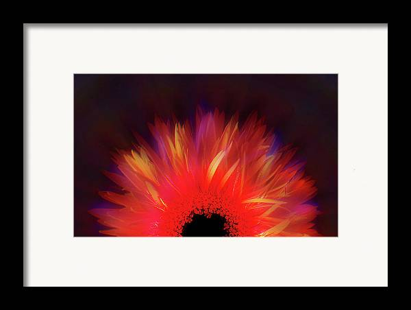 Avantgarde Framed Print featuring the photograph Feathered Floral by Li  van Saathoff