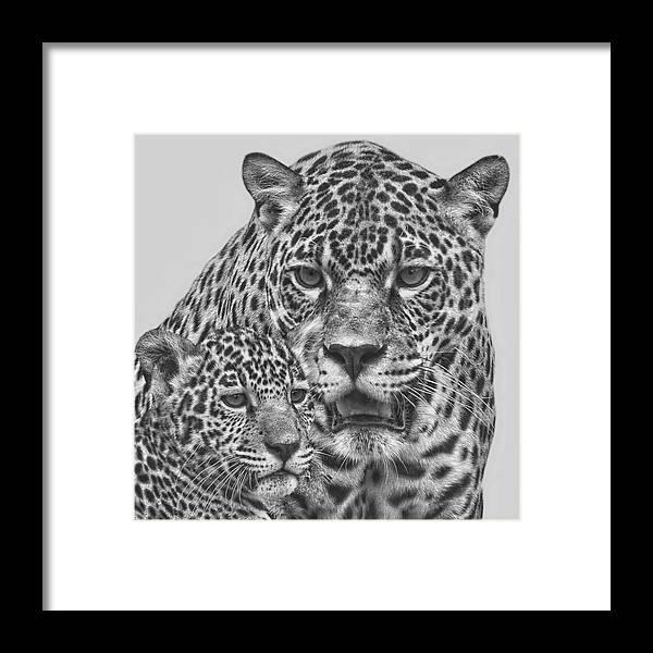 Jaguar Framed Print featuring the digital art Female Jaguar And Cub by Larry Linton