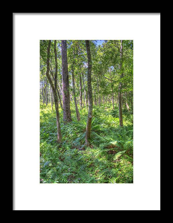 Fern Framed Print featuring the photograph Fern Forest by David Troxel