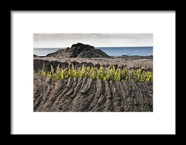 Lava Framed Print featuring the photograph Ferns Growing From A Crack In The Lava by Todd Gipstein