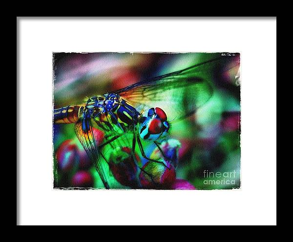 Dragonfly Framed Print featuring the photograph Ferocious by Judi Bagwell