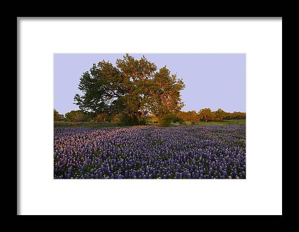 Framed Print featuring the photograph Field Of Blue by Susan Rovira