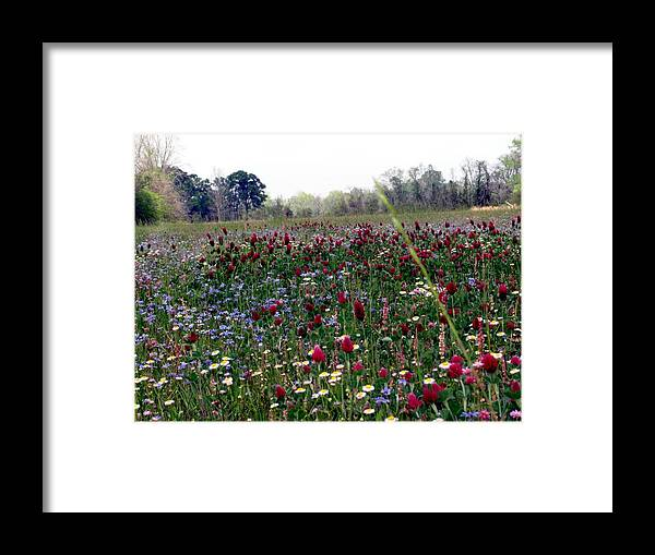 Flowers Framed Print featuring the photograph Field Of Color by Megan Joffrion