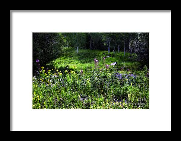 Flowers Framed Print featuring the photograph Field Of Dreams by Madeline Ellis