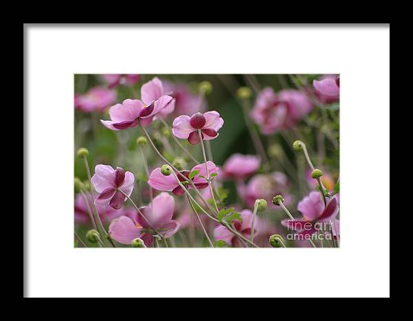 Floral Framed Print featuring the photograph Field Of Japanese Anemones by Living Color Photography Lorraine Lynch