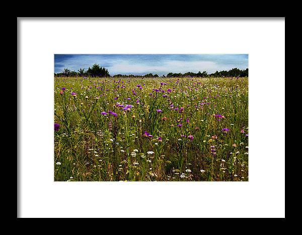 Flowers Framed Print featuring the photograph Field Of Thistles by Tamyra Ayles