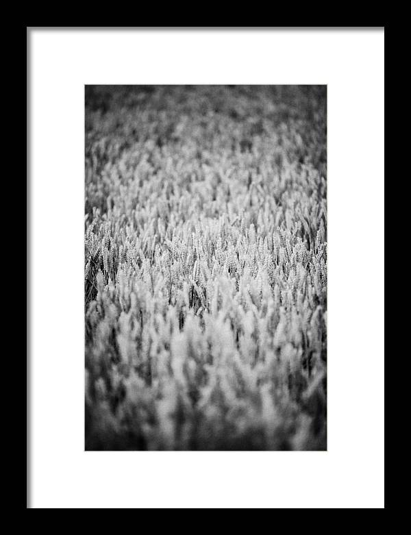 County Down Framed Print featuring the photograph Field Of Wheat In Ireland by Joe Fox