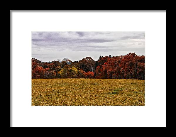 Fields Of Gold Framed Print featuring the photograph Fields Of Gold by Bill Cannon