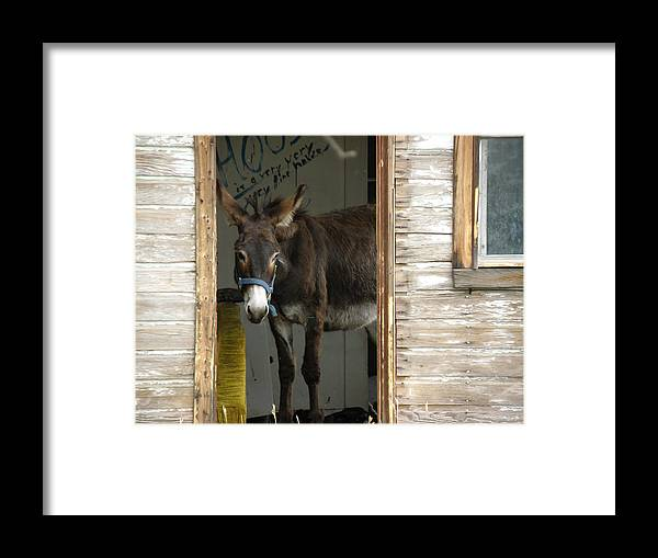 Donkey Framed Print featuring the photograph Fine House by FeVa Fotos