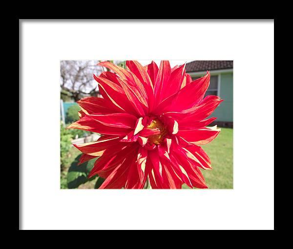 Flower Framed Print featuring the photograph Fire Petals by Rani De Leeuw