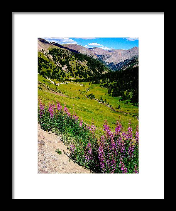 Fireweed Framed Print featuring the photograph Fireweed In Henson Creek Drainage by FeVa Fotos
