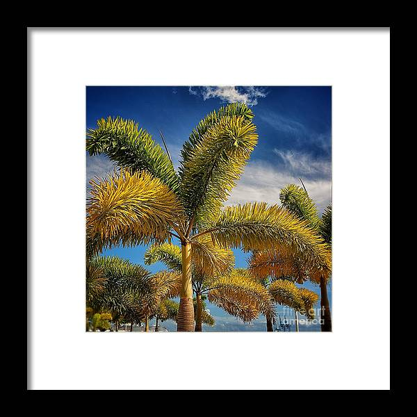 Framed Print featuring the photograph Fireworks by Jacques ISMAEL