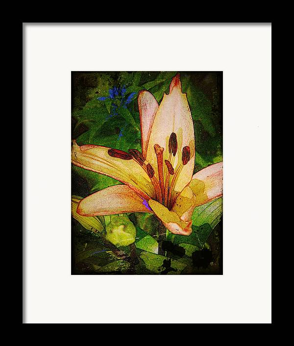 Earthy Framed Print featuring the photograph First Asiatic by Chris Berry