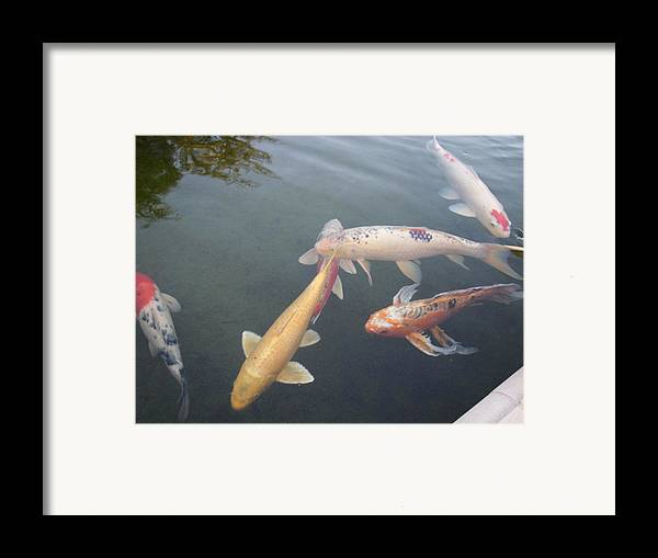 Fish Framed Print featuring the photograph Fish Swimming by Val Oconnor
