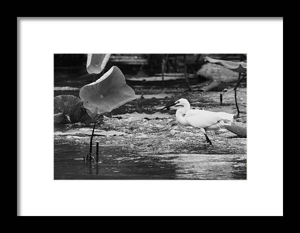 Corroboree Billabong Framed Print featuring the photograph Fishing Spot by Douglas Barnard