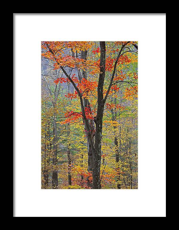 Fall Framed Print featuring the photograph Flaming Fall Foliage by John Stephens