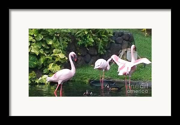 Birds Framed Print featuring the photograph Flamingo Party by Silvie Kendall
