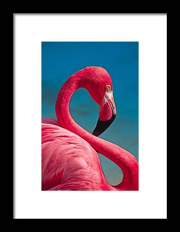 Flamingo Framed Print featuring the photograph Flexible Flamingo by Michele Burgess