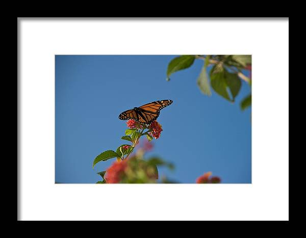 Blue Sky Framed Print featuring the photograph Flight by Joseph Yarbrough