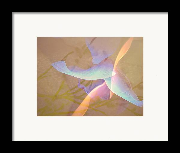 Abstract Framed Print featuring the photograph Flight by Shirley Sirois
