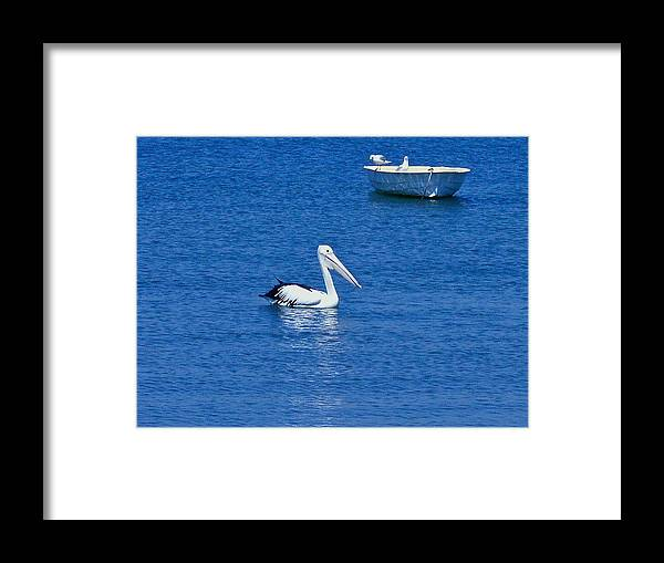 Pelican. Boat. Sea. Water. Blue. Black And White. Bird. Outdoors. Nature.reflection. Beak. Framed Print featuring the photograph Floaters by Michael Clarke JP