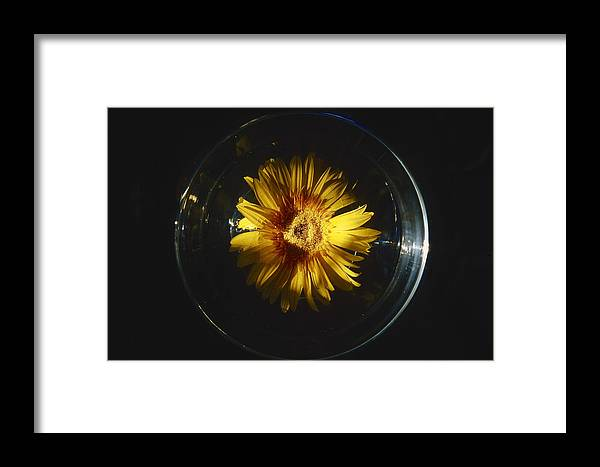 Yellow Framed Print featuring the photograph Floatting Flower by Patrick Kessler